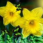 Daffodils In The Garden Poster