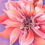Dahlia 2 Poster by Phyllis Howard