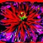 Dahlia Rouge Texture Avec La Frontiere  Poster