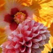 Dahlia With Hibiscus Poster