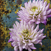Dahlias Against Rusty Wall Poster