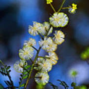 Dainty Wildflowers On Blue Bokeh By Kaye Menner Poster