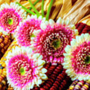 Daises On Indian Corn Poster