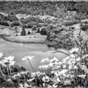 Daisies At Queens View In Greyscale Poster