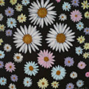 Daisies On Black Poster