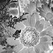 Daisy Bouquet In Black And White Poster