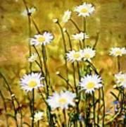 Daisy Field Poster