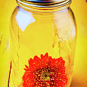 Daisy In Glass Jar Poster