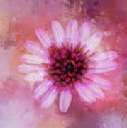 Daisy In Magenta Poster