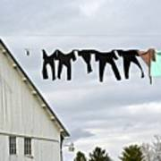 Dancing Amish Laundry Poster