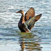 Dancing Duck Poster