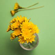 Dandelion Flower Clippings Poster