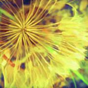 Dandelion Harvest Poster