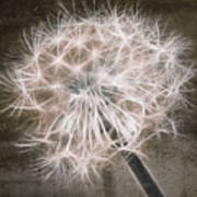 Dandelion In Brown Poster by Aimelle