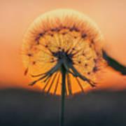 Dandelion In The Sun Poster
