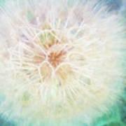Dandelion In Winter Poster