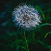 Dandelion Seeds 2 Poster