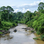 Danum Valley Poster