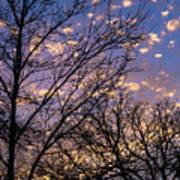 Dappled Sunset-1547 Poster