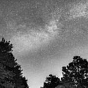Dark Forest Night Light Poster