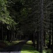 Dark Forest Road Poster