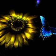 Dark Glow Butterfly Poster
