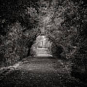 Dark Path In Black And White Poster