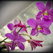 Dark Pink Orchids All In A Row Poster by Eva Thomas