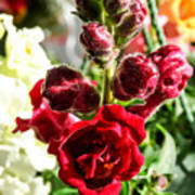 Dark Red Fancy Snapdragon Poster
