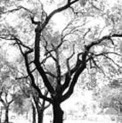Dark Roots Poster