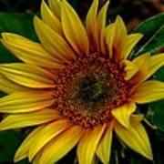 Dark Sunflower Poster