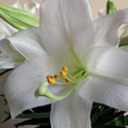 Darn Beautiful Flower Poster