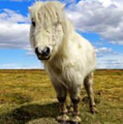 Dartmoor Pony Poster