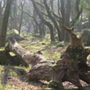 Dartmoor Woods Poster