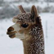 Dashing Through The Snow Poster
