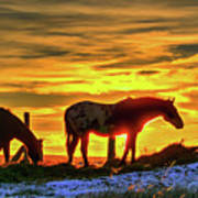 Dawn Horses Poster