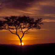 Dawn On The Masai Mara Poster