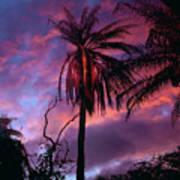 Dawn Palm 03 Poster