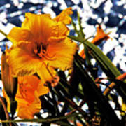 Day Lilies In  Space Poster