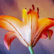 Day Lily Back Poster