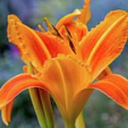 Day Lily Bright Poster