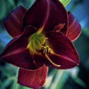 Day Lily Dark Poster