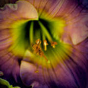 Day Lily In Purple Poster