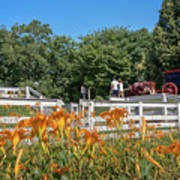 Daylilies And Oxen Wagon Poster