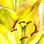 Daylily Poster