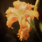 Daylily Dream Poster