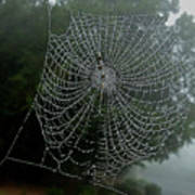 Db6325-dc Spiderweb On Sonoma Mountain Poster