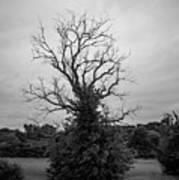Dead Live Oak Poster