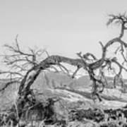 Dead Old Tree Near Monument Valley Arizona Poster