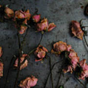Dead Roses 6 - Photo Poster